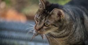 Predator organization achieving its goal